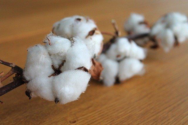 綿 コットン